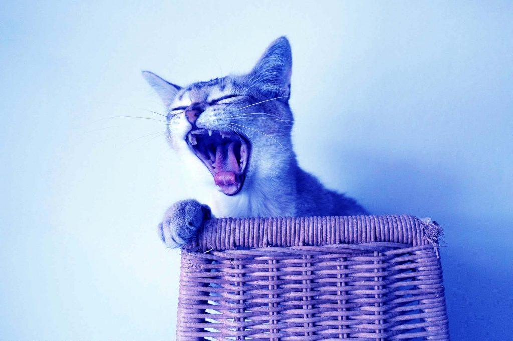 Video gatti e sesto chakra
